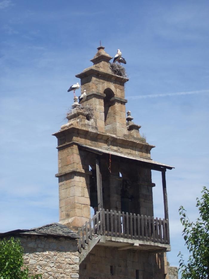 Storks like campaniles