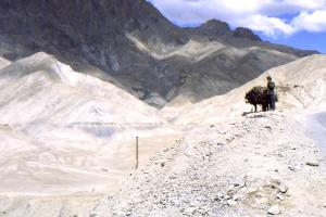Traditional transport on the road to Leh