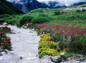 Best-Time-to-visit-Valley-of-Flowers
