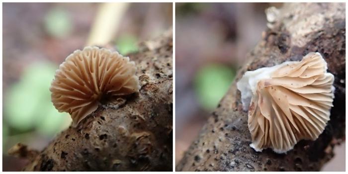 fungi-collage-copy