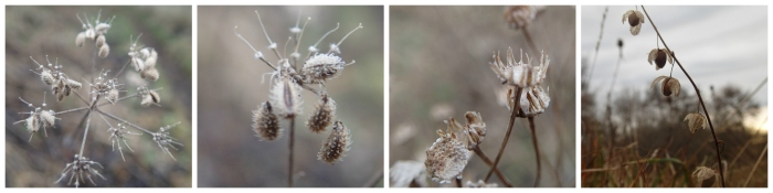 seed-heads-collage