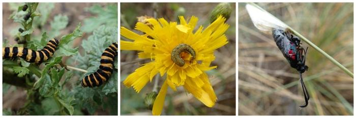 Caterpillar Collage