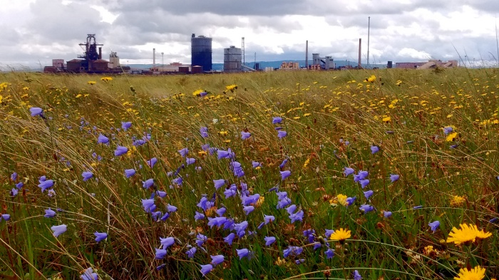 Harebells and steel works