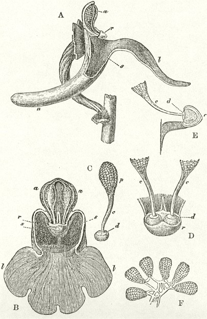 1862_Orchids_F800_fig01