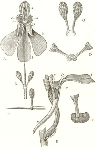1862_Orchids_F800_fig03