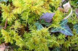 moss and ivy, small