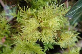 moss small