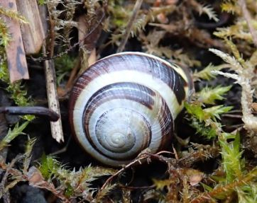 snail small 1