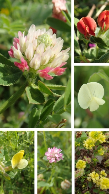 Kato Paphos legume collage